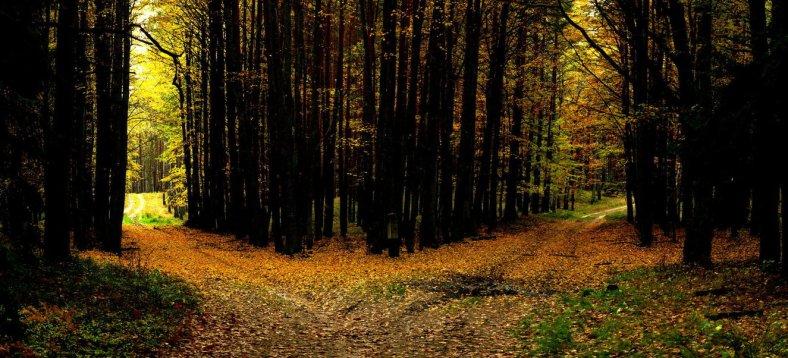 Divergent Path